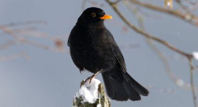 Comptez les oiseaux les 30 et 31 janvier !