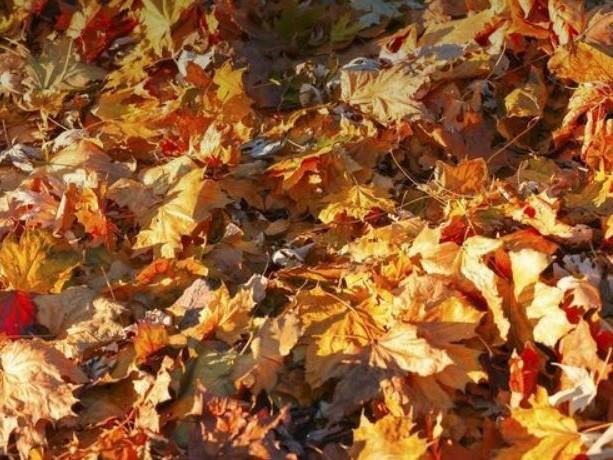 Peut-on brûler les feuilles mortes au jardin ?