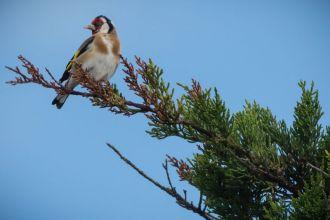 La LPO dresse un bilan inquiétant de 30 années de comptages des oiseaux en France