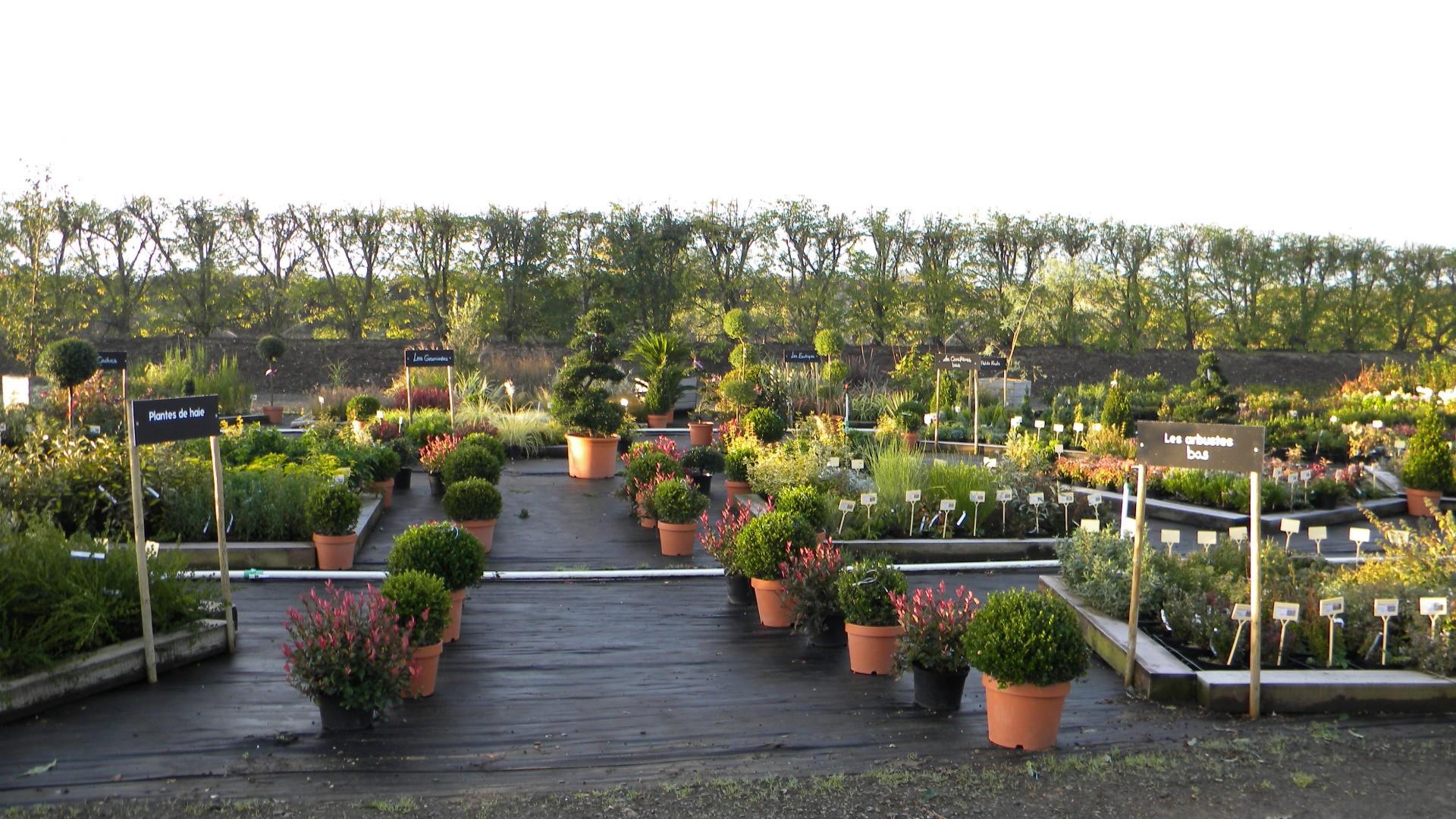 Végétaux pour aménagements extérieurs (jardins, bacs en terrasse, ...)