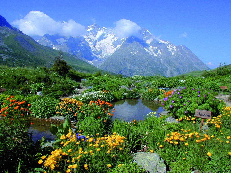 Jardin alpin du lautaret beaux jardins et potagers - Jardin de rocaille et jardin alpin enidees inspirantes ...