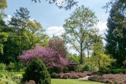 """""""Le printemps"""" à l'Arboretum des Grandes Bruyères"""