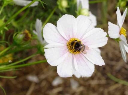 Le potager aux fleurs beaux jardins et potagers for Jardin aux fleurs