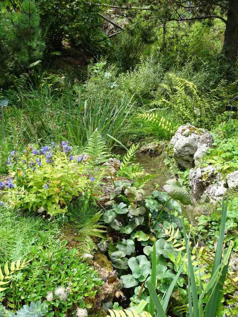 Le jardin alpin du jardin des plantes beaux jardins et for Jardin du plantes