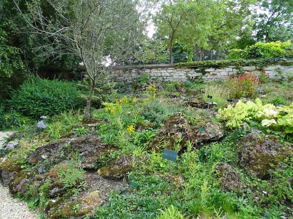 Le jardin alpin du jardin des plantes beaux jardins et for Plantes du jardin