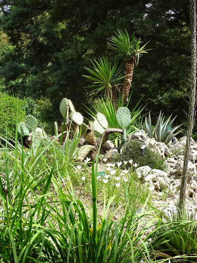 Le jardin alpin du jardin des plantes beaux jardins et - Jardin de rocaille et jardin alpin enidees inspirantes ...