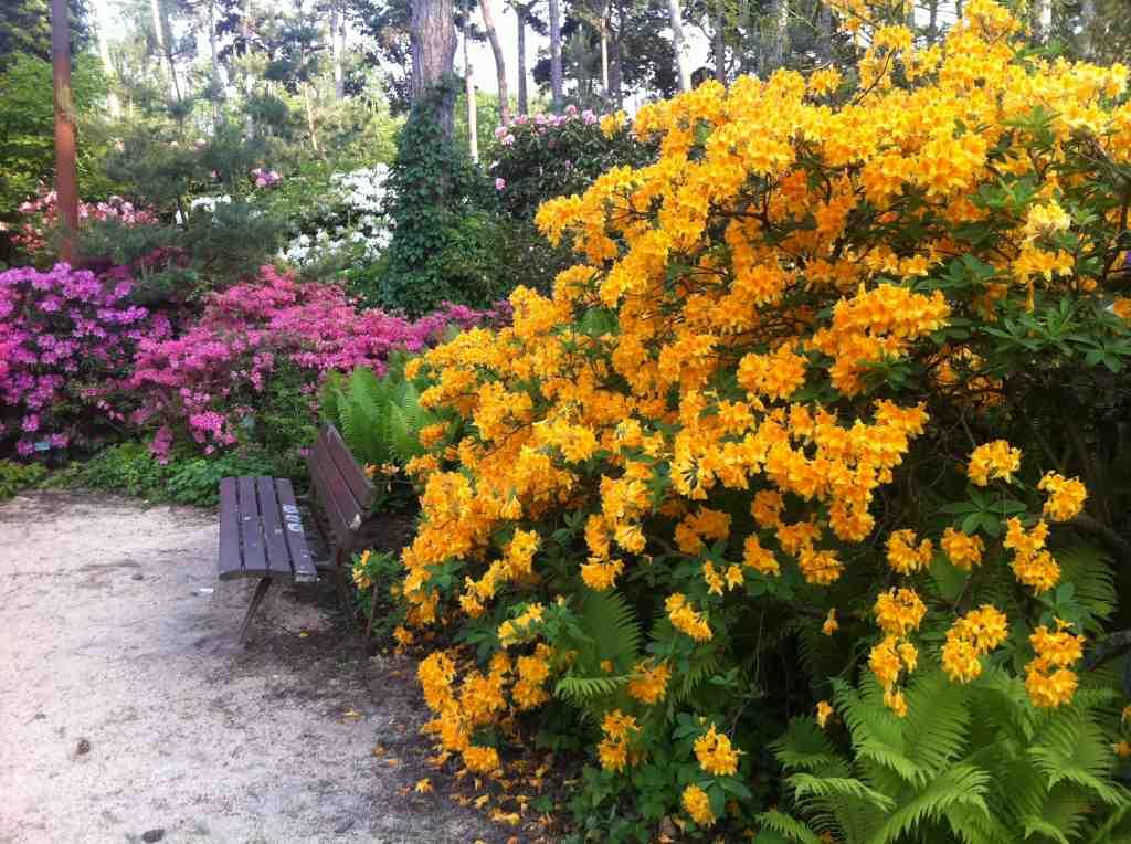 parc floral de paris vincennes beaux jardins et potagers. Black Bedroom Furniture Sets. Home Design Ideas