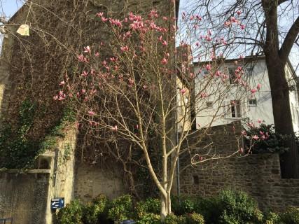 Le jardin d 39 hiver de la salle des mariages de la mairie de for Jardin feerique ploeuc
