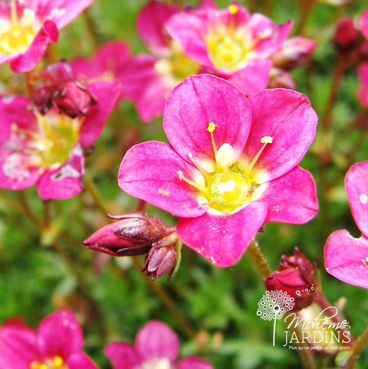 Les fleurs d'avril - Beaux jardins et Potagers