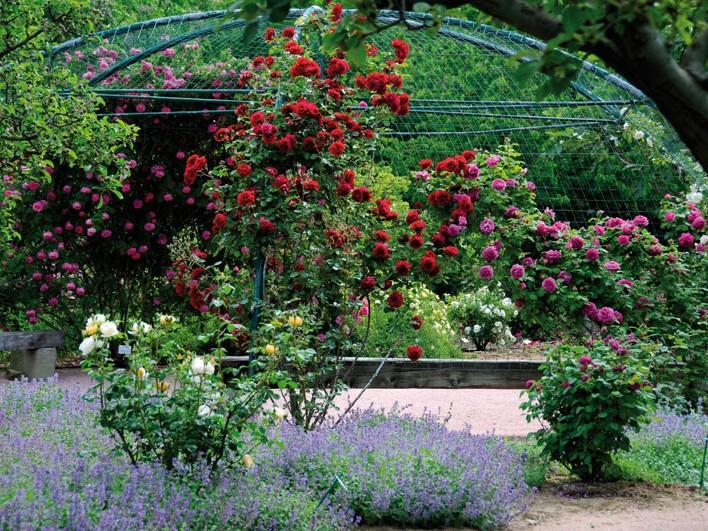 Visite du jardin aux plantes parfum es beaux jardins et for Jardin aux plantes