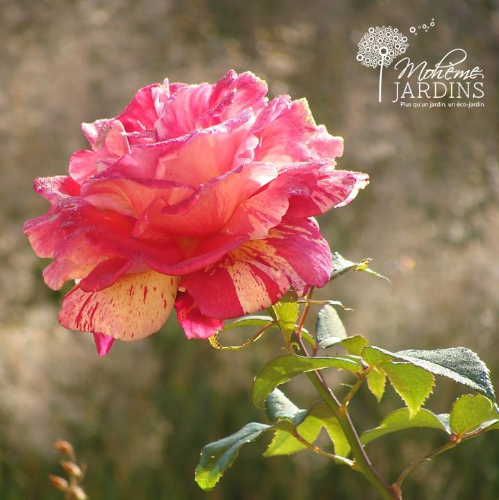 Les fleurs de juillet par Mohème JARDINS - Beaux jardins et Potagers