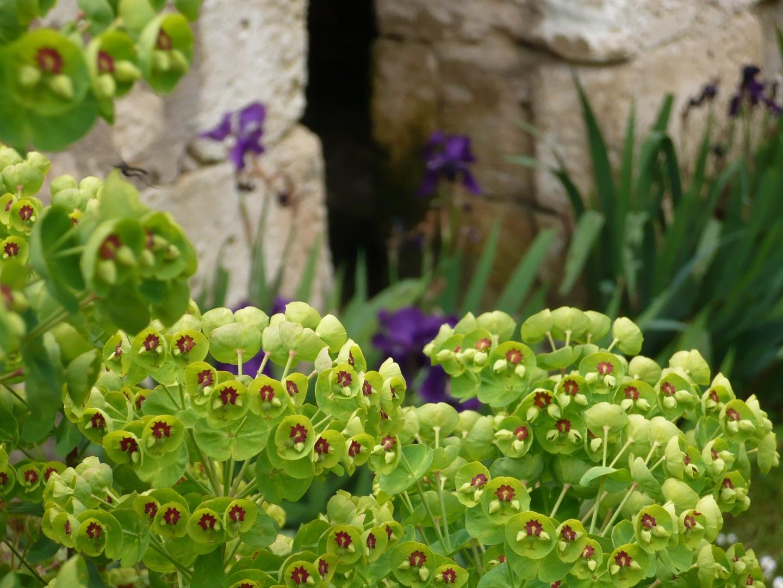 P pini re de plantes vivaces rustiques beaux jardins et for Plantes vivaces rustiques