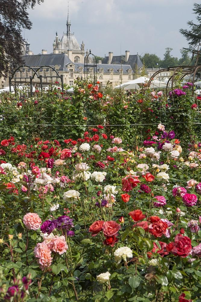 Journ es des plantes de chantilly beaux jardins et potagers - Fete des plantes chantilly ...