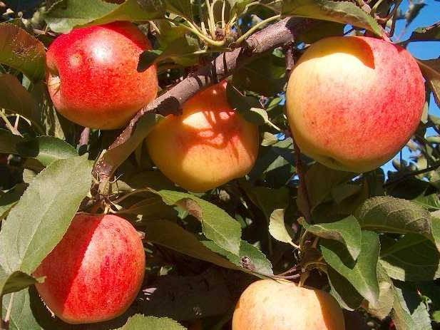 Décembre au Jardin Fruitier