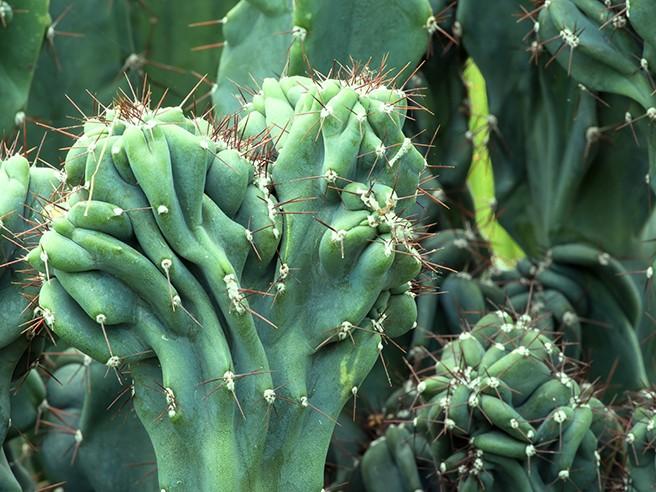 Visite guidée : PLANTES SPECTACULAIRES