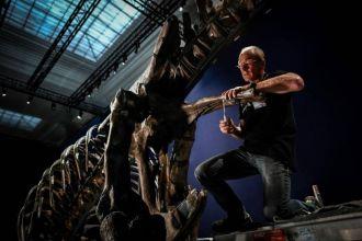 L'un des plus beaux T.Rex au monde va passer l'été au Jardin des Plantes de Paris.