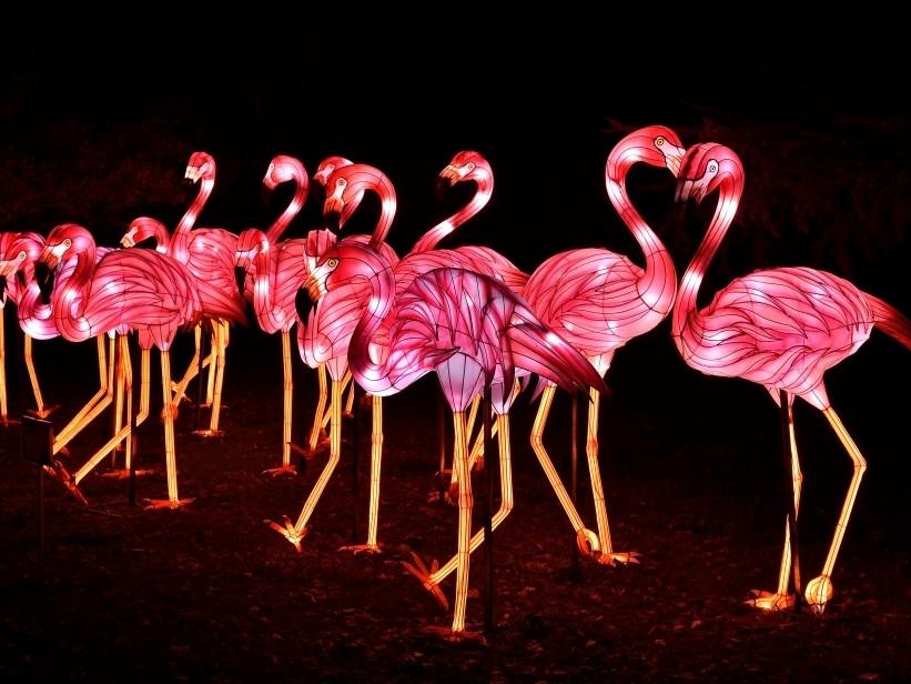 1er festival des lumières au jardin des plantes de paris : Espèces en voie d'illumination