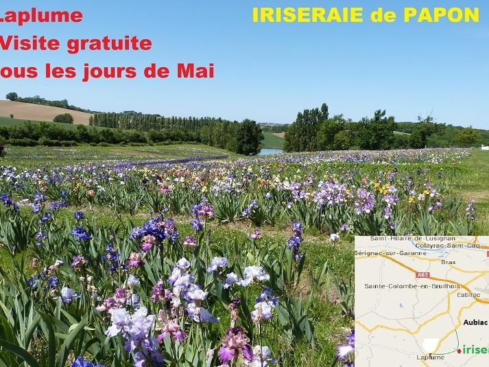 En Mai visitez l'Iriseraie de Papon