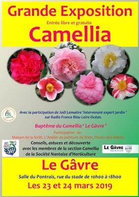 Grande exposition de Camellia