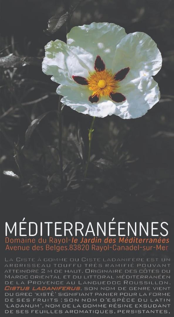 MÉDITERRANÉENNES-Féroces-Douces