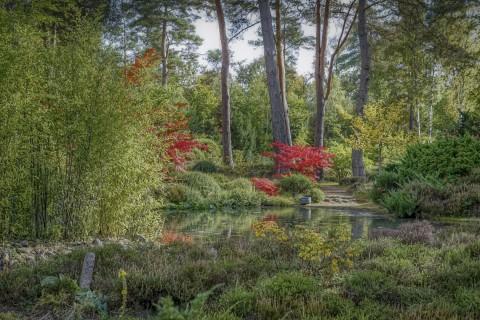 500 ans de Renaissance(s) et de botanique