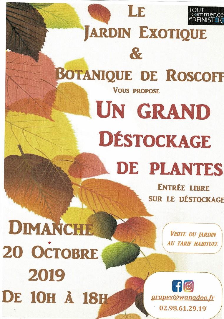 Grand destockage de plantes