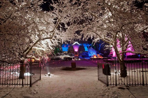 Noël au Jardin