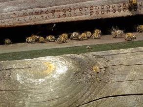 Le monde des pollinisateurs
