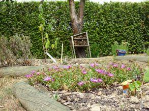 Un jardin favorable à la biodiversité