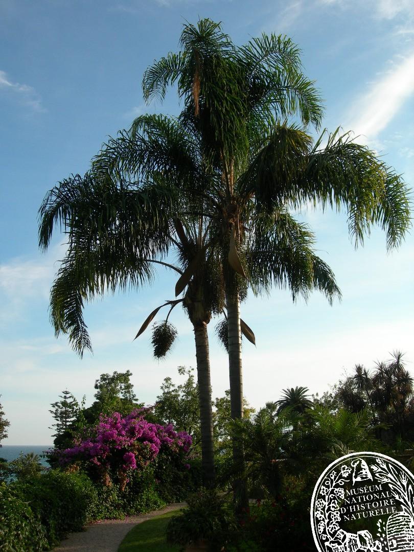 Conférence : L'épopée des palmiers sur la Riviera