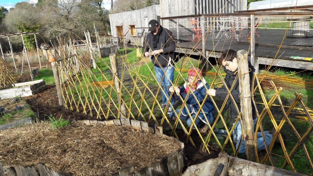 Stage bordures tressés en osier vivant - Beaux jardins et Potagers