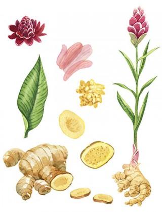 Cours de botanique (débutant) QU'EST-CE QU'UNE PLANTE ?