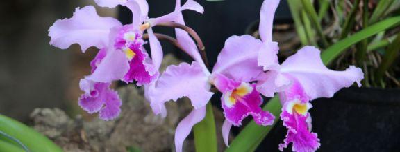 Mille et une orchidées 2018 au muséum national d'histoire naturelle
